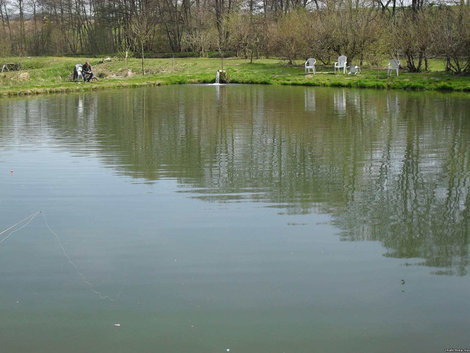 Как организовать пруд для платной рыбалки? Пошаговый 20